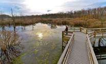 Audubon Wetlands - photo by Robbie Williams - March 2014