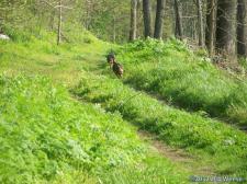 Wild turkeys at Rockcress Hills State Nature Preserve in Franklin County http://naturepreserves.ky.gov/.