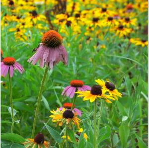 Flowers and native grasses act as a filter and slow erosion.