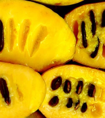 The inside of a pawpaw.