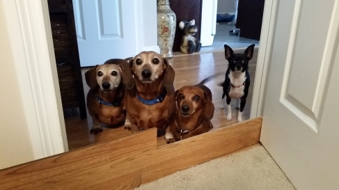 From left to right: Wiley, Bailey, Peanut and Moochie.