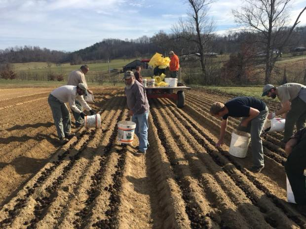 Black Walnut and bur oak being planted by hand.