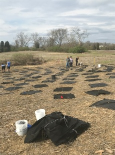Many trees had already been planted shortly after the event began.