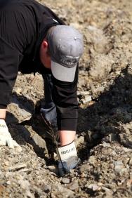 An Angel Envy's worker plants a white oak seedling. Photo courtesy of Angel's Envy.