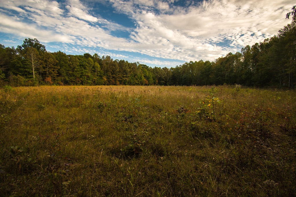 Hazeldell Meadow Preserve in Pulaski County.