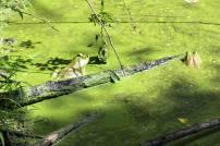 Quiet Trails frog.
