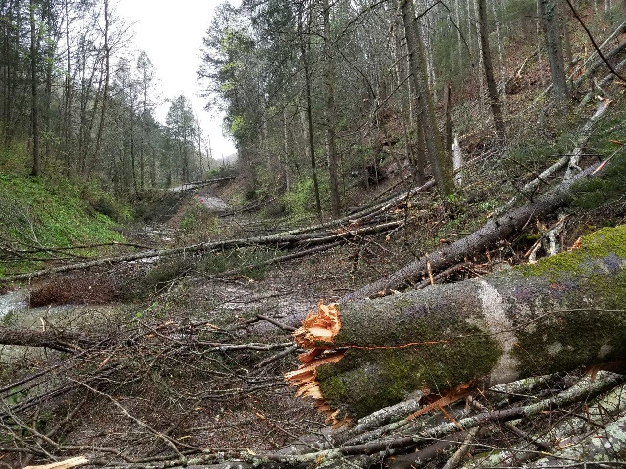Division of Forestry Partnership with KEWS Helps Restore, Maintain Emergency Communication